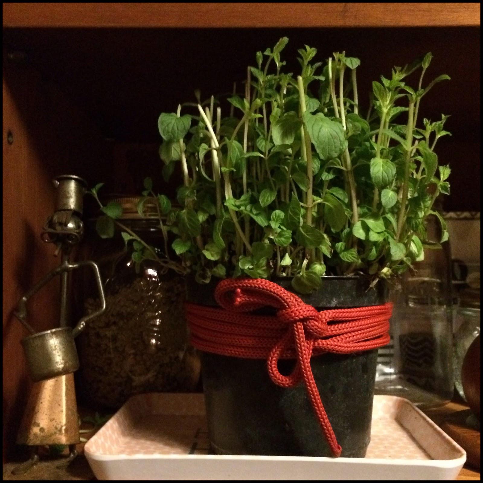 Menta in cucina rose semplici - Formiche in cucina ...