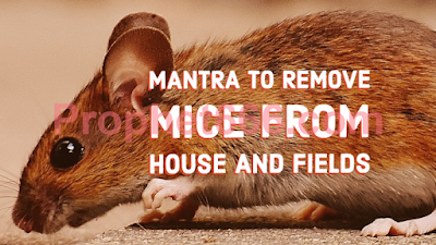 Mantra Chant to Remove Mice from House and Fields
