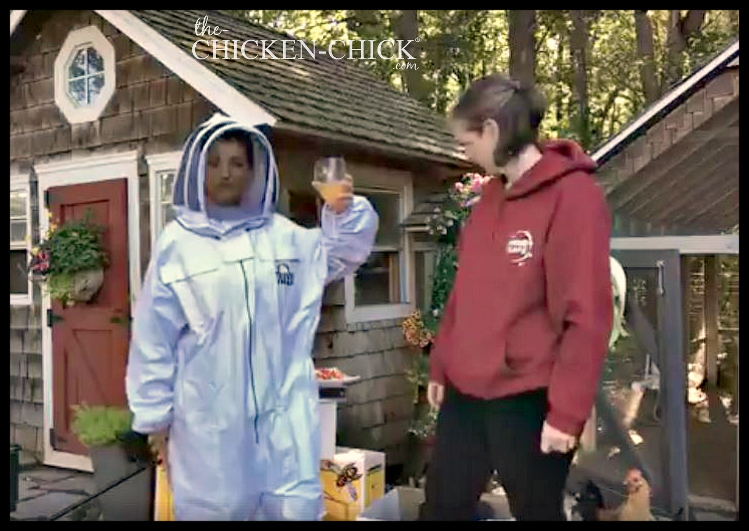the chicken holy cow i u0027m a beekeeper