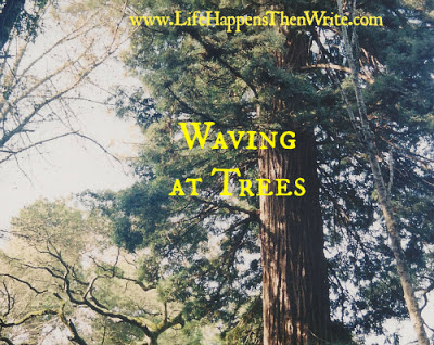Waving at Trees {Confessions of a Montessori Mom}