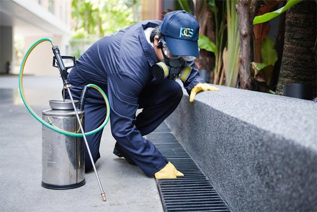Pest Control Companies Offer A Quick And Lasting Solution To All Your Pest Problems!