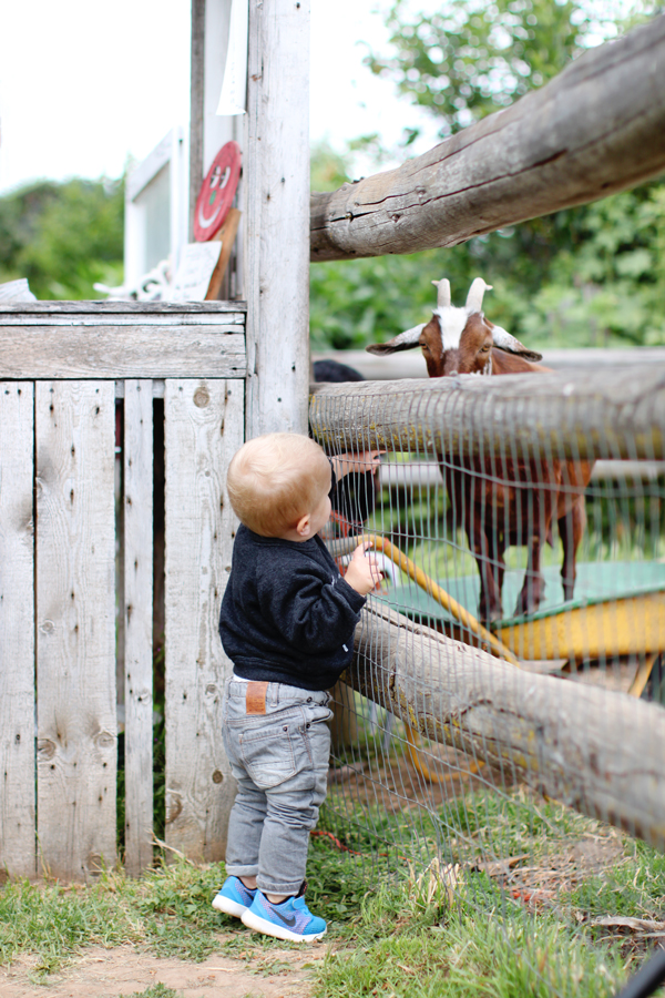 Feeding goats at Draper Girls Country Farm