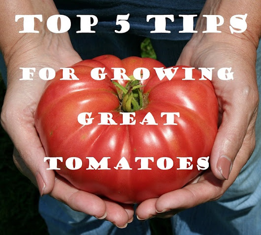 Top 5 Tips For Growing Great Tomatoes.