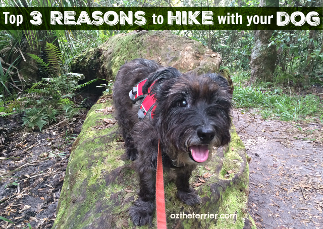 Oz's top 3 reasons to hike with your dog