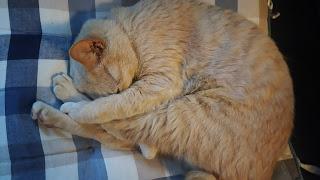きれいに丸くなった猫