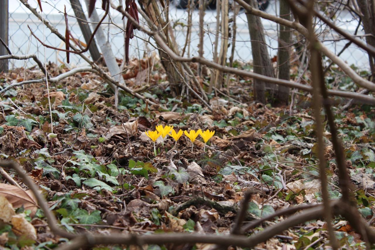 Der Garten Im Marz Bergblumengarten