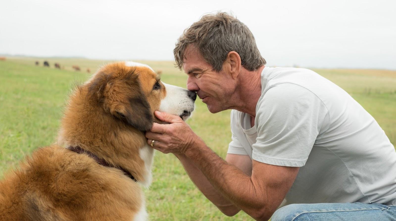 """Com voz de Bradley Cooper, """"Quatro Vidas de Um Cachorro"""" ganha primeiro trailer"""