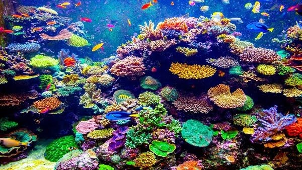 What If Coral Reefs Disappeared?