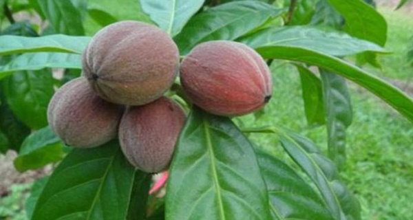 Unbelievable New Discovery! This Fruit Destroys Cancer Within A Few Minutes!