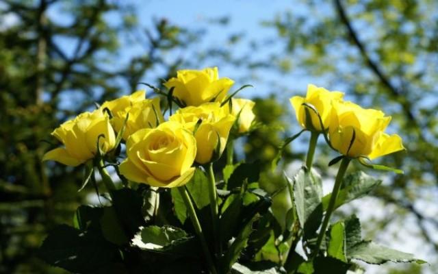 Pics Of Beautiful Flowers Hd