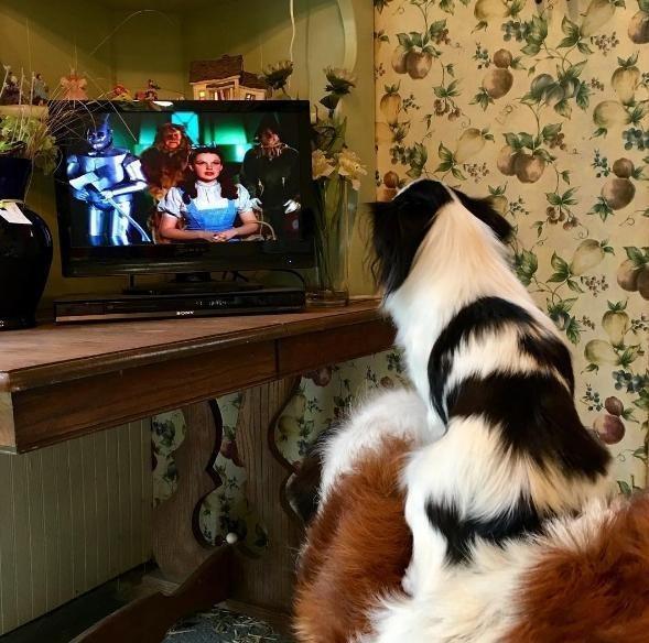 """""""cún lớn đèo cún bé đi khắp thế gian"""""""