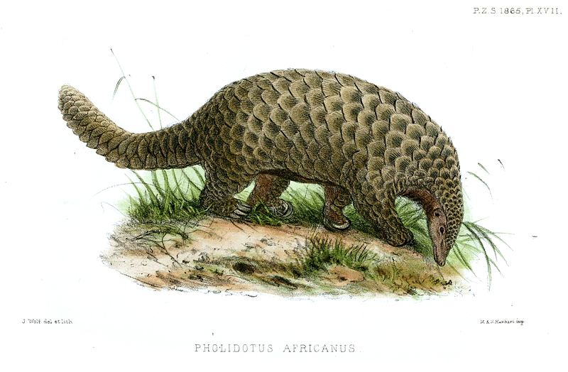 d20 despot monster monday pangolins armor covered anteaters