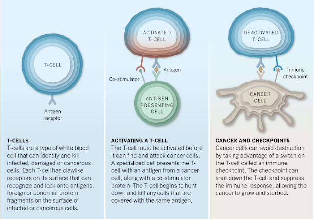Immunotherapy for Cancer Treatment : beginning of a new era