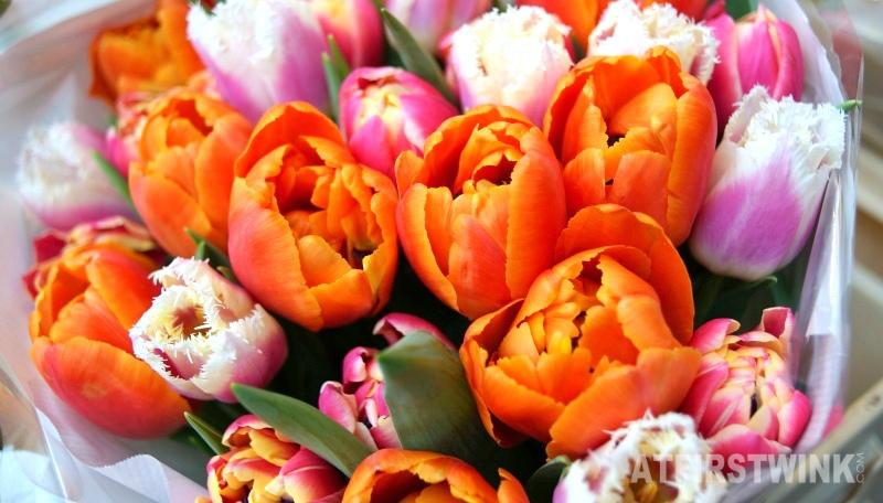 bright orange tulips Markthal Rotterdam Netherlands