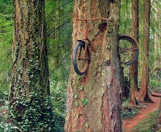 Boy went to world war in 1914 left his bike chained to a tree