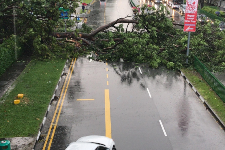 A fallen tree across three lanes resulted in a traffic jam along Marine Parade Road.