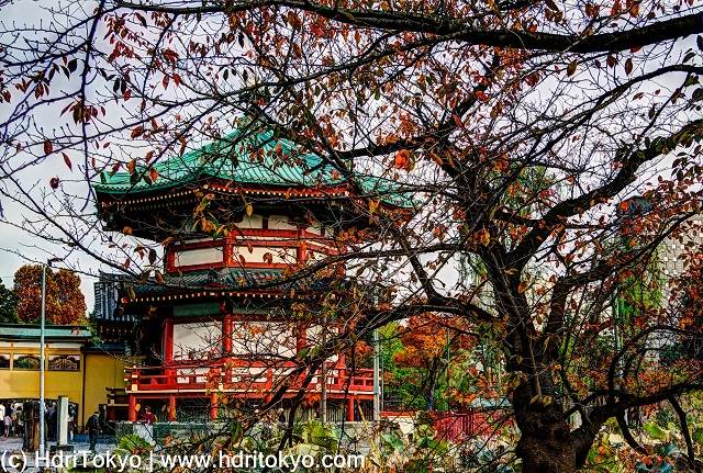 a cherry tree with red leaves.  a temple hall behind the tree.