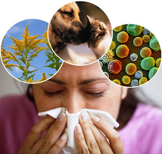 Foods That May Help Those with Allergies