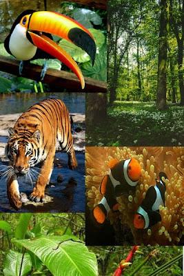 Biodiversidade e Biogeografia