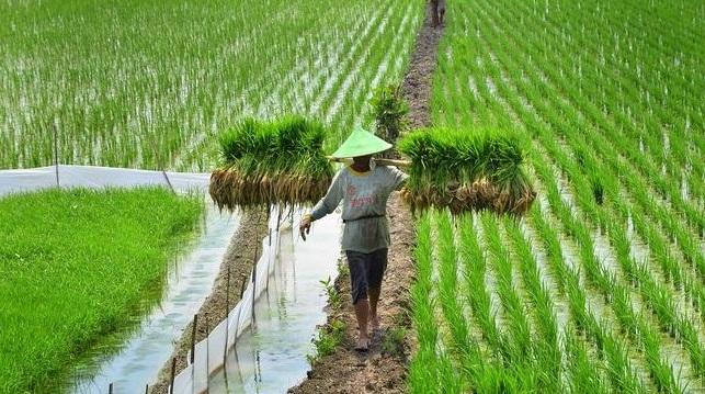 Inspirasi Peluang Usaha Pertanian Yang Menjanjikan Tulisanndeso