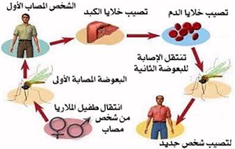 الأمراض الجرثوميّة و الوقاية منها