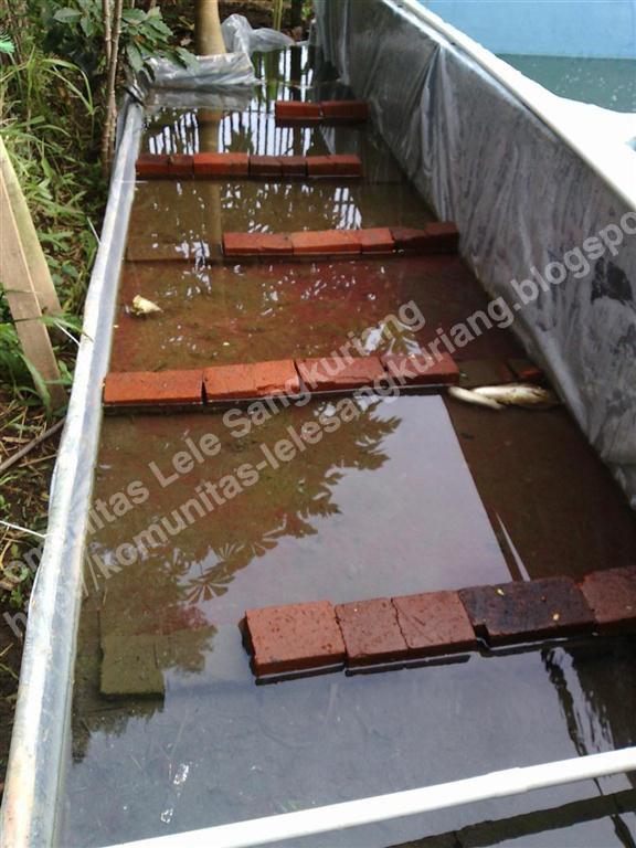 Beternak Cacing Sutra Tubifex Pada Lahan Sempit Komunitas Budidaya Lele Sangkuriang
