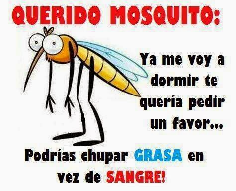 Mosquitos humor