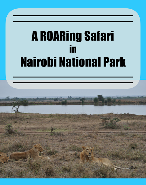 Seeing Lions in Nairobi National Park
