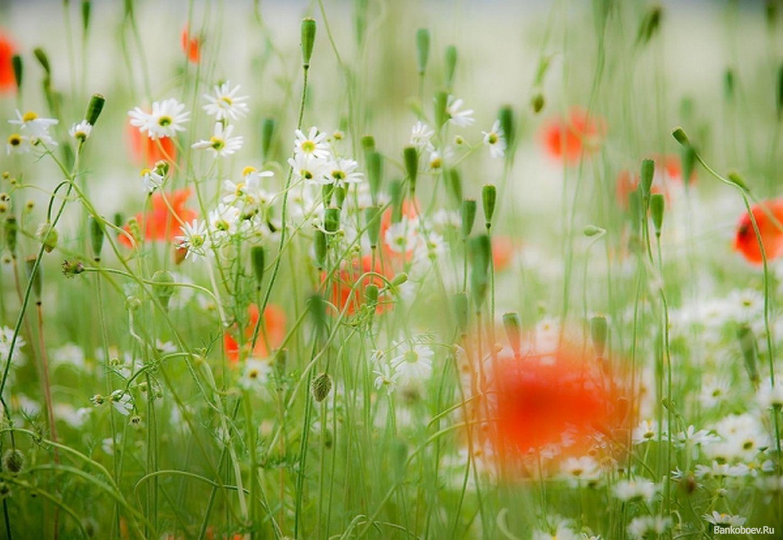 桌布下載: 桌布下載 : 花園