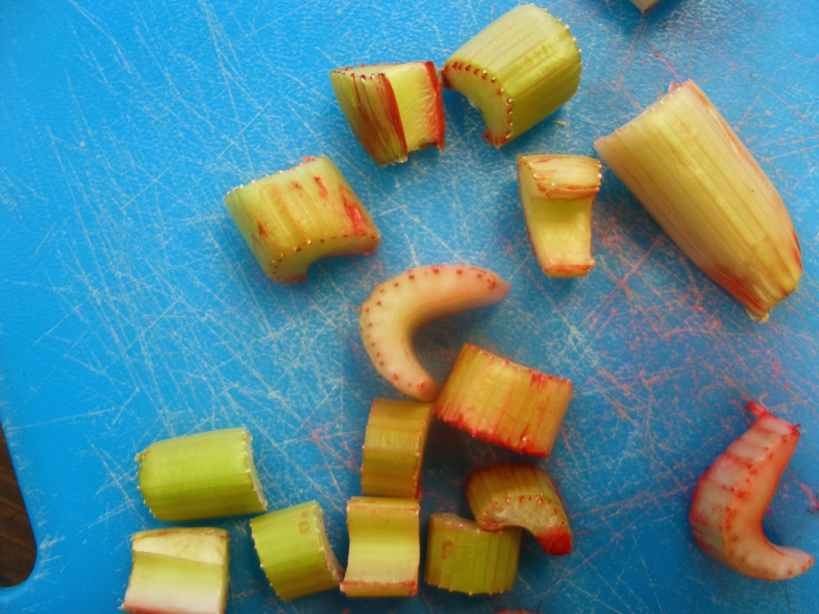 Learning In Place Celery Experiment How A Plant