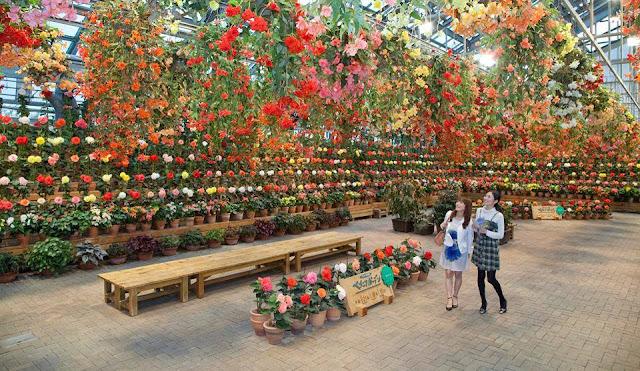 Sắc hoa Nhật Bản