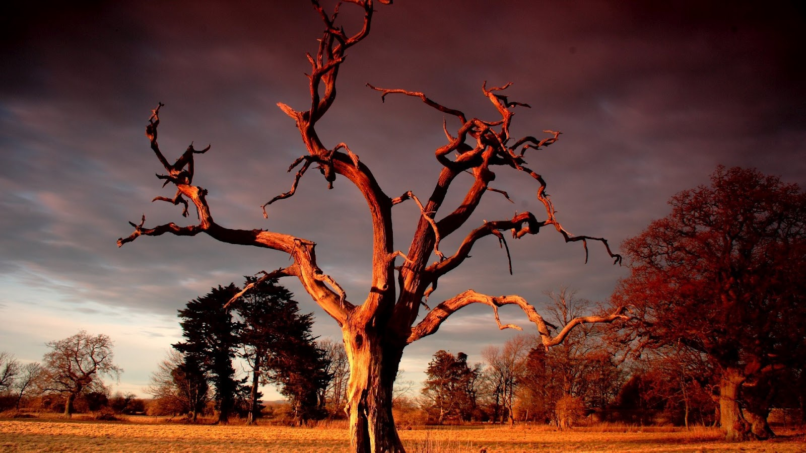 http://2.bp.blogspot.com/-02cOeLSZoEQ/UGLRYOpUFqI/AAAAAAAABjA/i-nAb75CEFk/s1600/red-sunset-over-dry-tree.jpg