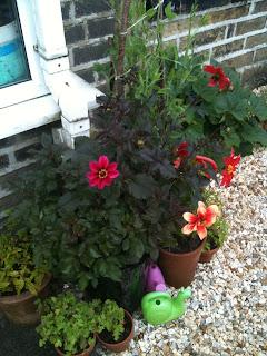 gardening, herb garden, small gardens, life on pig row