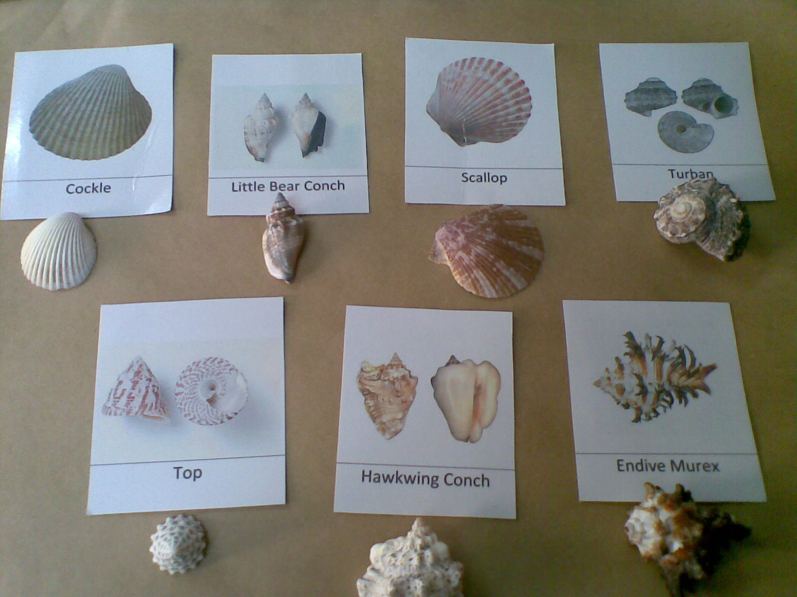 Desert Crafter Sea Shells Free Printable