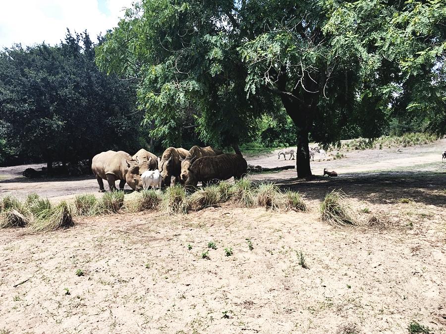 safari tour dieny park orlando