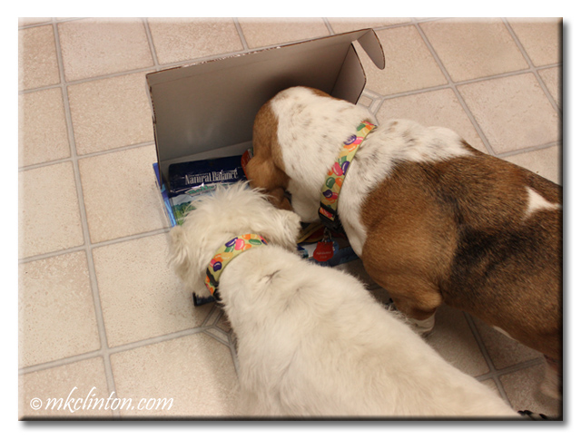 Bentley and Pierre examine the goodies in a box from Natural Balance