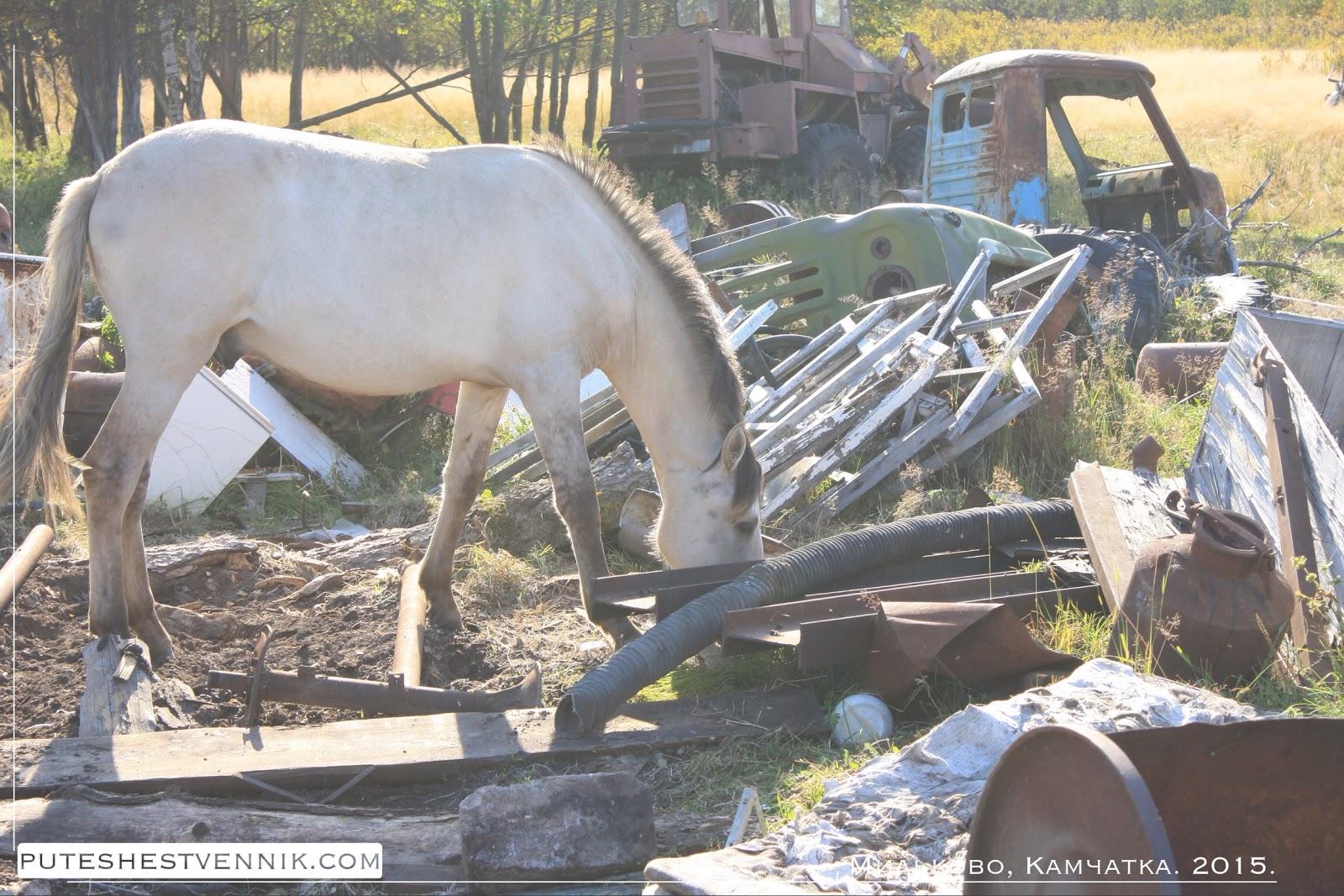Лошадь среди мусора на Камчатке