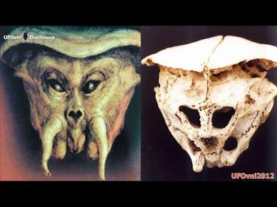 Resultado de imagen de cráneo de Ródope