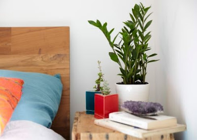Ideas for Making Sleep Quality Better With Ornamental Plants