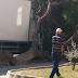 Ödemiş'te kamyon çam ağacını devridi
