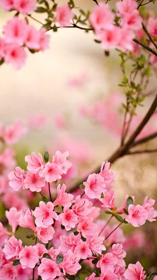 pink flower whatsapp backgrounds for iphone