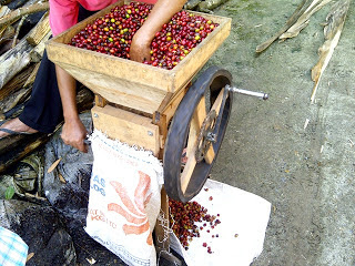 alat pengolahan biji kopi secara tradisional
