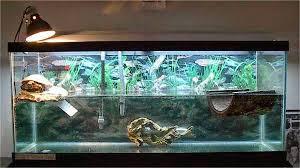 Aquarium Khusus Kura-Kura