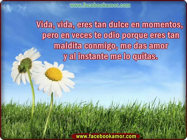 Imagenes Bonitas De Flores Con Frases: Imagenes De Flores Con Frases De Vida Para Facebook