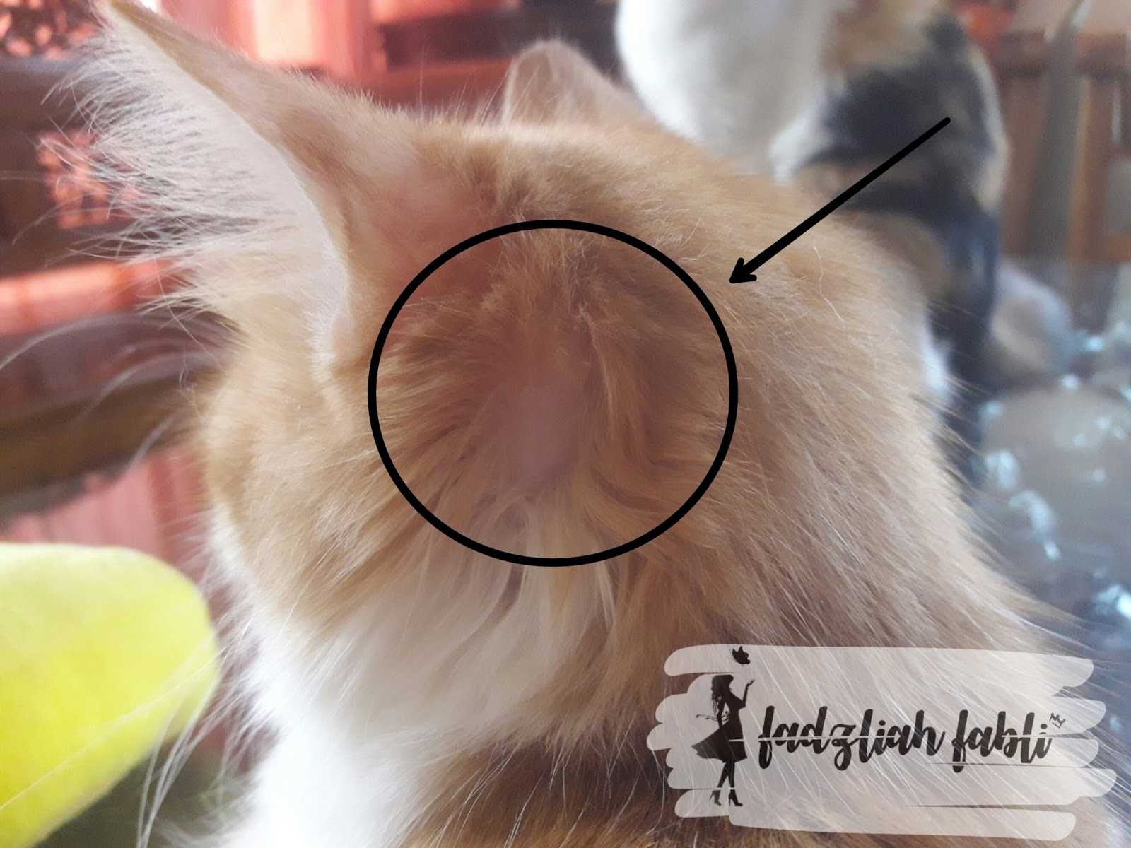 Fadzliah Fabli Cat Tips Fungus Kucing
