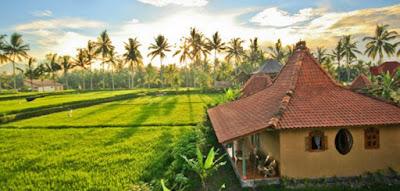 Gambar Pemandangan Alam di Desa Indonesia Keindahan Sawah Pohon Kelapa