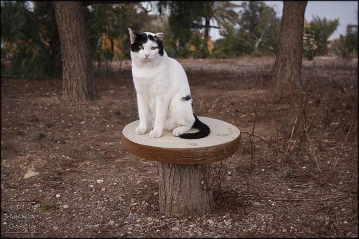 fotografia,gato,rené,fuente_alamo,tocon,tronco,taburete