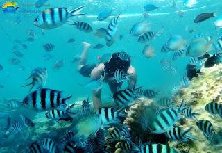 surga bawah laut karimunjawa