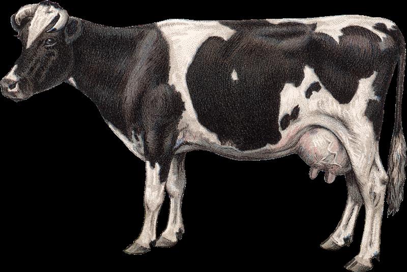 Imagenes Vacas Animadas: Imagenes Animadas De Vacas Letras Animadas Vacas