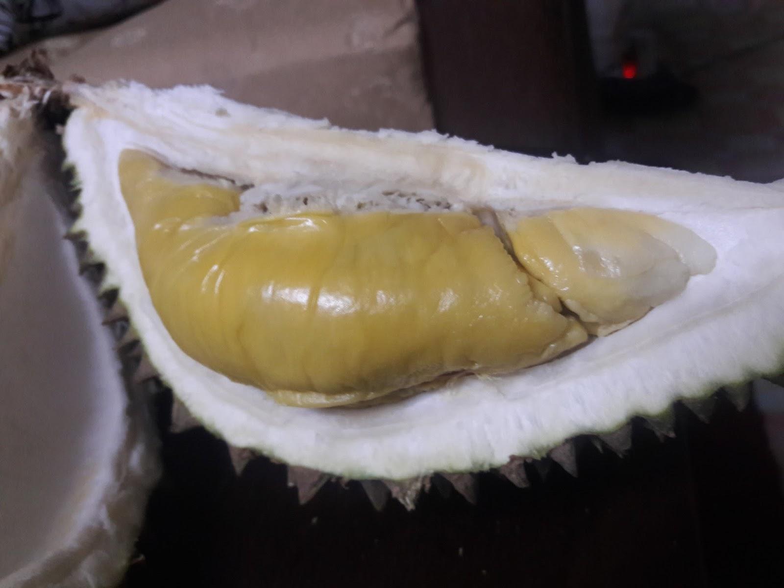 Pertama Kali Makan Durian Musang King CeLoteh MJ